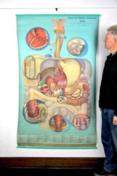*Denoyer Geppert Medical Chart: Digestive.