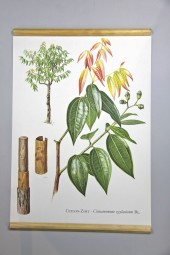 Original German Chart: Bamboo