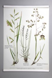 Original German Chart: Grasses