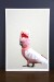 Studio Cockatoo Empirical Style Graphic Art Print_8727