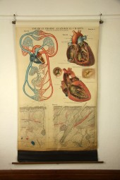 *Vintage Frohse chart. The heart.