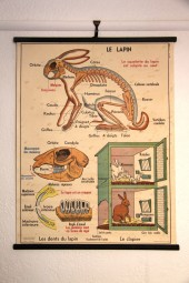 *Vintage german double sided chart.